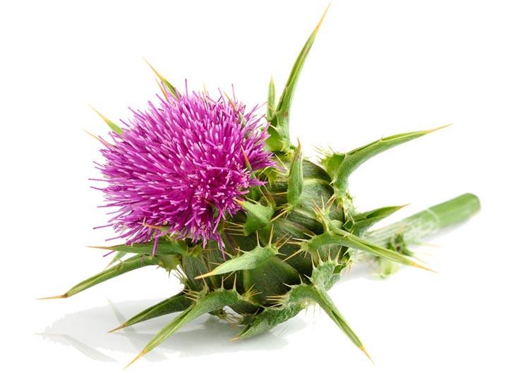 natur-tanya-hepa-detox-emesztes-zsirmaj-majvedo-mariatovis-g.jpg