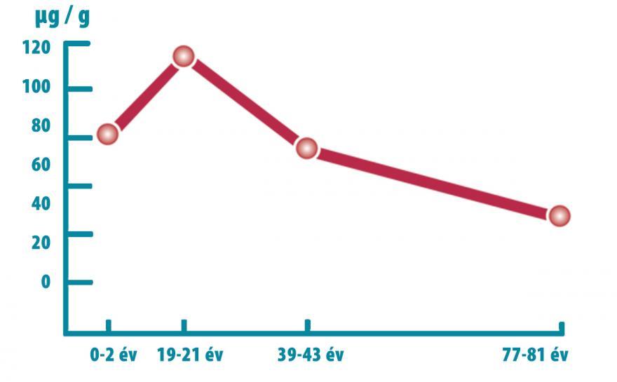 A koenzim Q10 szintézise a szív szöveteiben